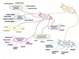 estilos y modelos de aprendizaje